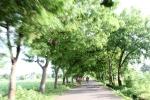 4-Bantayan treeline